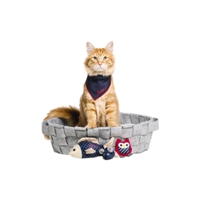 Cats Accessories & Supplies