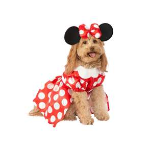 Dogs Accessories & Supplies